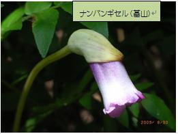 Img_20090929_02