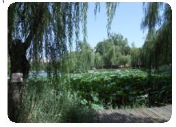 北京留学日誌(7) 2013年度夏期中国短期留学